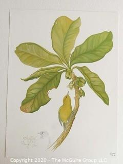 2 Prints of Birds on Branch Signed by Artists
