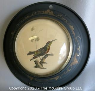 "Pair of Two Bird Drawings in Tole Painted Frames with Convex Glass. They Measure Approximately 6"" in diameter."