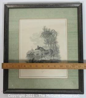 """Vintage Framed Under Glass Black and White Lithograph of Zebra.  Measures approximately 16"""" x 13""""."""