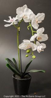 "Faux Orchid in Black Ceramic Vase; 19""T"
