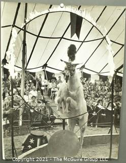 """Vintage Large Format Black & White Photo of Goat Performing at the Circus. by Art Rickerby, Photographer. Measures 10"""" x 14""""."""