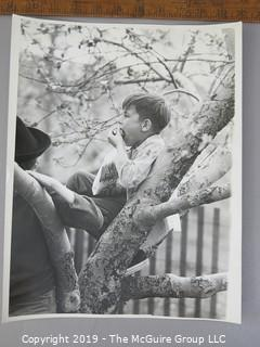 Photo: Large Format B&W: Arthur Rickerby: Historical: Americana: boy eating apple in apple tree