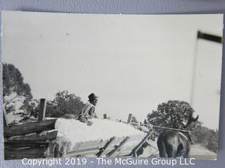 Photo: uncredited: Historical; Americana: The South: black workers transporting raw cotton in horse drawn carts